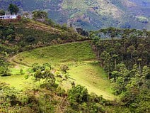 photo de plantations de café favorisées par le climat de la Colombie